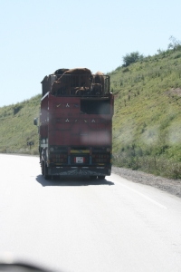 Cattle truck with heads tied down on the top deck